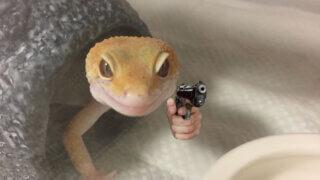 レオパ 拳銃 狙っている